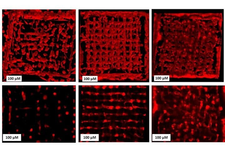 Discovery of New Method Speeds Up Precision 3D Bioprinting