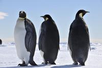 3D Printing In Antarctica?