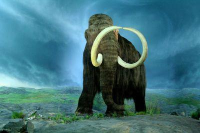 3D Printed Mammoth Steaks?!
