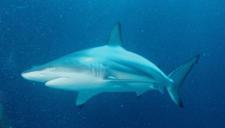 3D Printing Fears Jump the Shark
