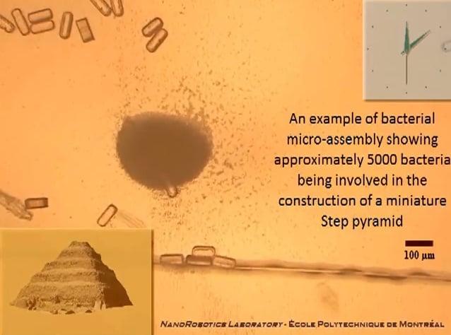 Microscopic Bacteria-Based 3D Printing