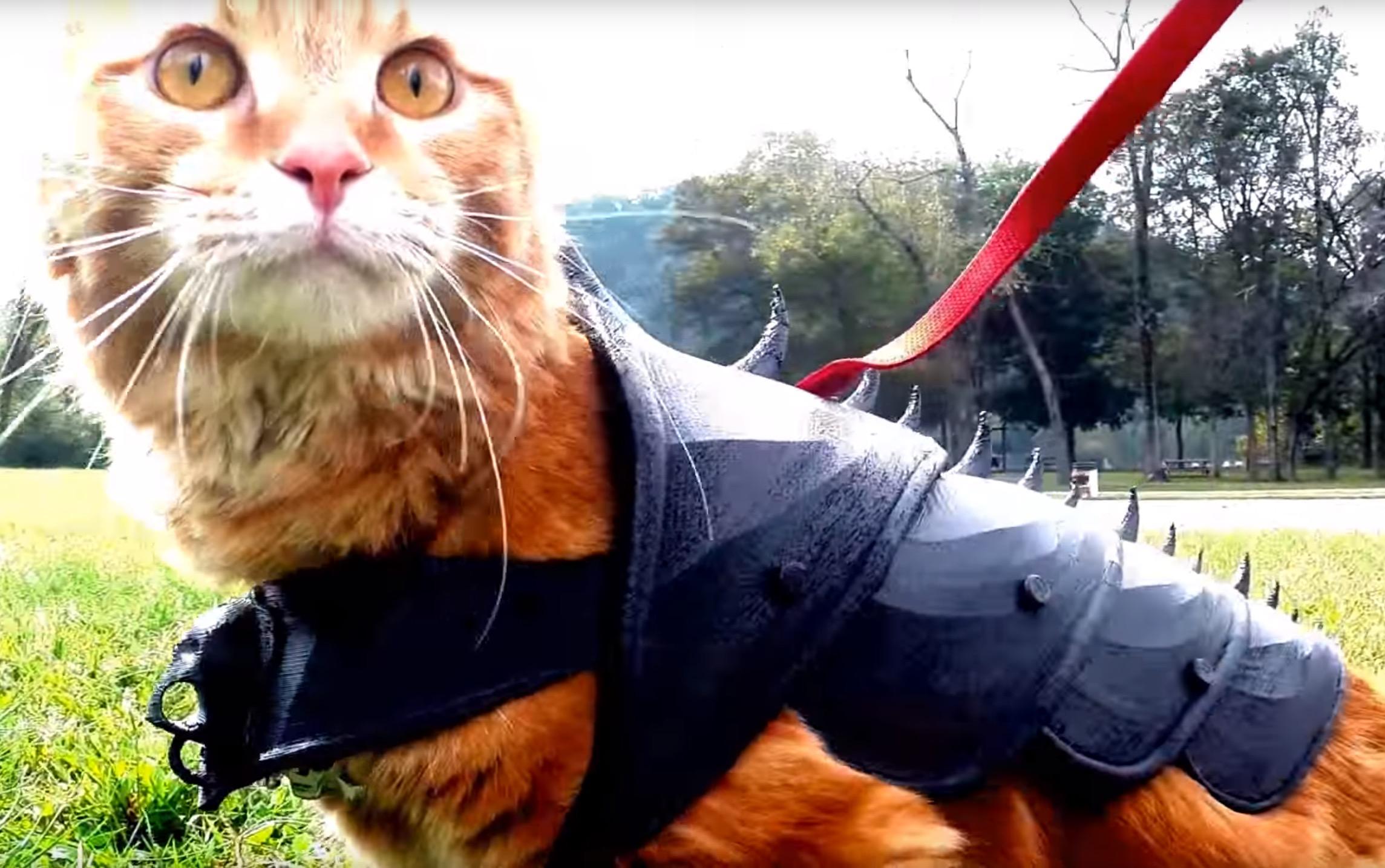 Design of the Week: 3D Printed Cat Armor