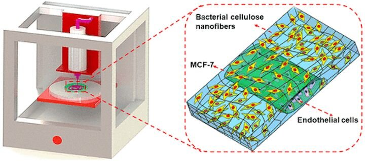 3D Printing A Bacterial Cellulose Hydrogel Matrix