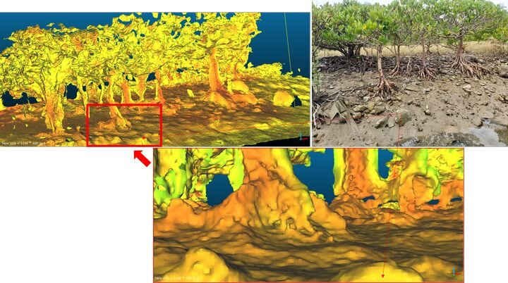 Question of the Week: 3D Scanning A Tree