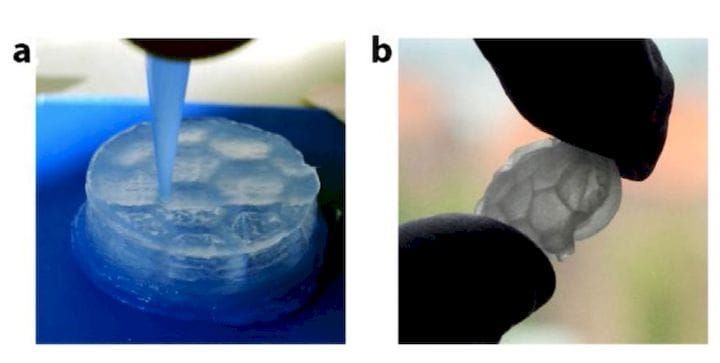 , Mimicking Wood Tissue With 3D Printing