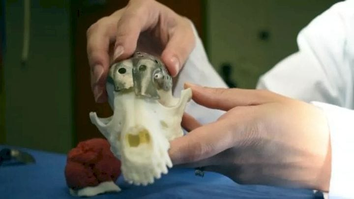 , Dog Receives 3D Printed Skull Implant in Pioneering Surgery