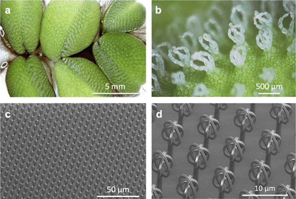 Nanoscribe's Bioinspiration
