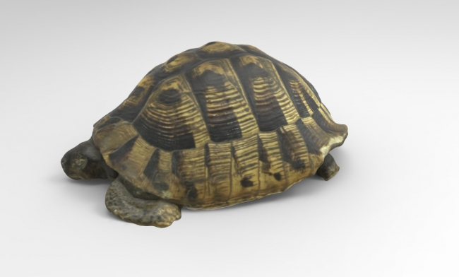 , Need a Vertebrate, a Tortoise, Antlers Or an Edible Dormouse 3D Model?