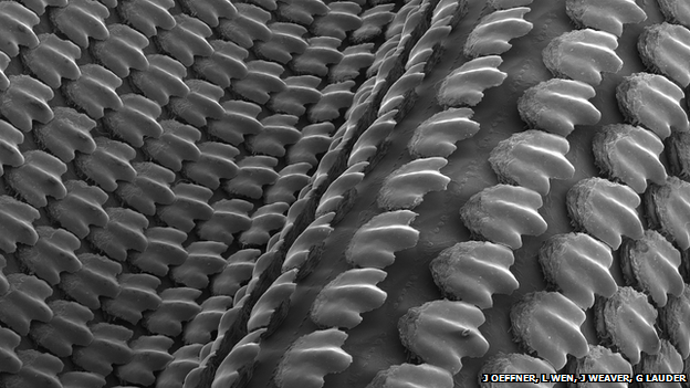 Shark Material Produced by 3D Printing