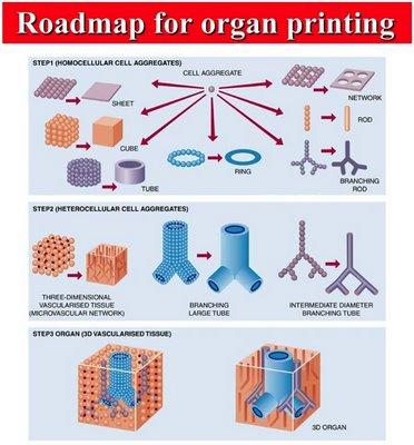 Organ Printing Pondered