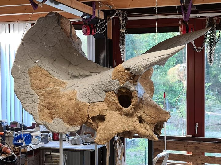 Design of the Week: Triceratops Skull No. 21