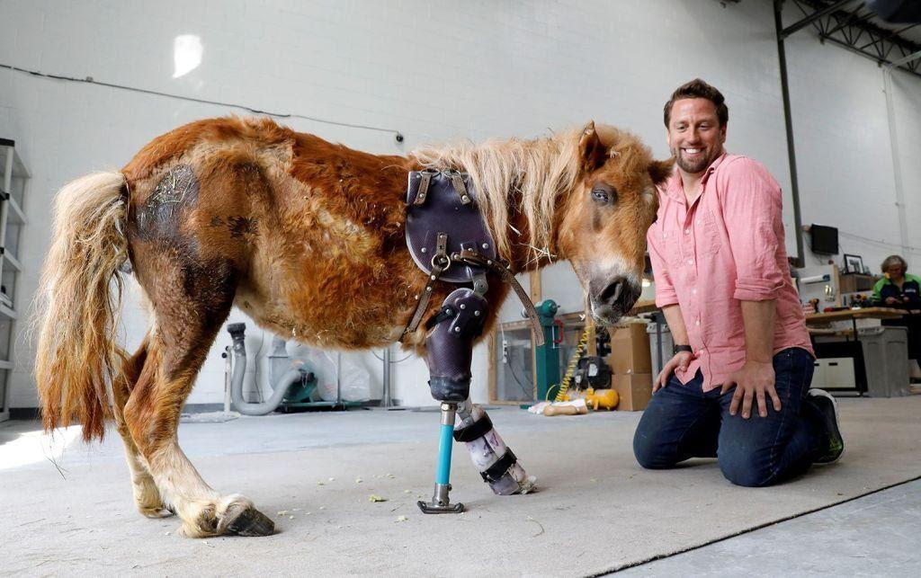 Designing 3D Printed Animal Prosthetics