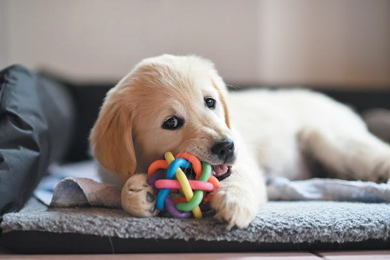 The Pet Industry And 3D Printing