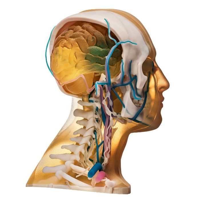 Stratasys Direct Now Offers Anatomical 3D Printing